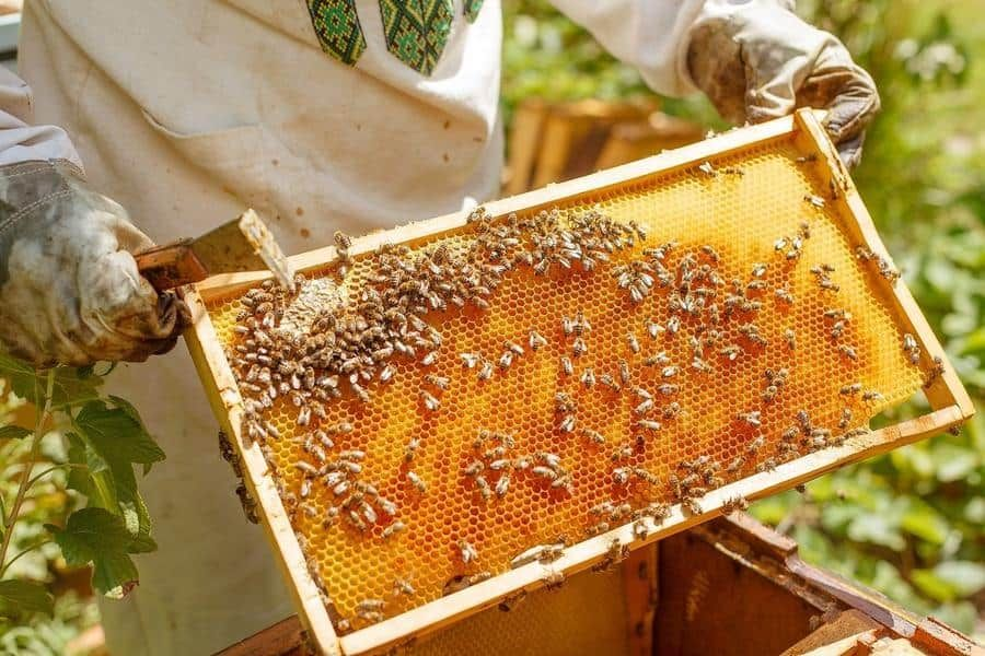 There's never been a better time to raise backyard bees ...