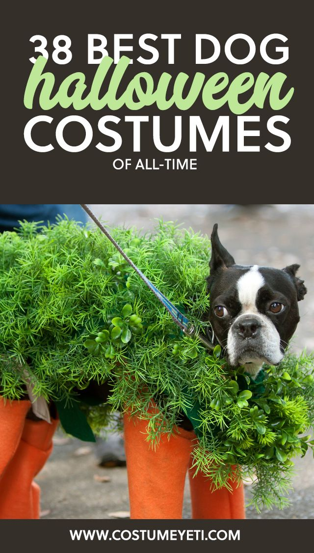 Love this list of the best dog Halloween costumes of all-time! So many greatu2026  sc 1 st  Pinterest & 38 Best Dog Halloween Costumes of All Time | Pinterest | Dog ...