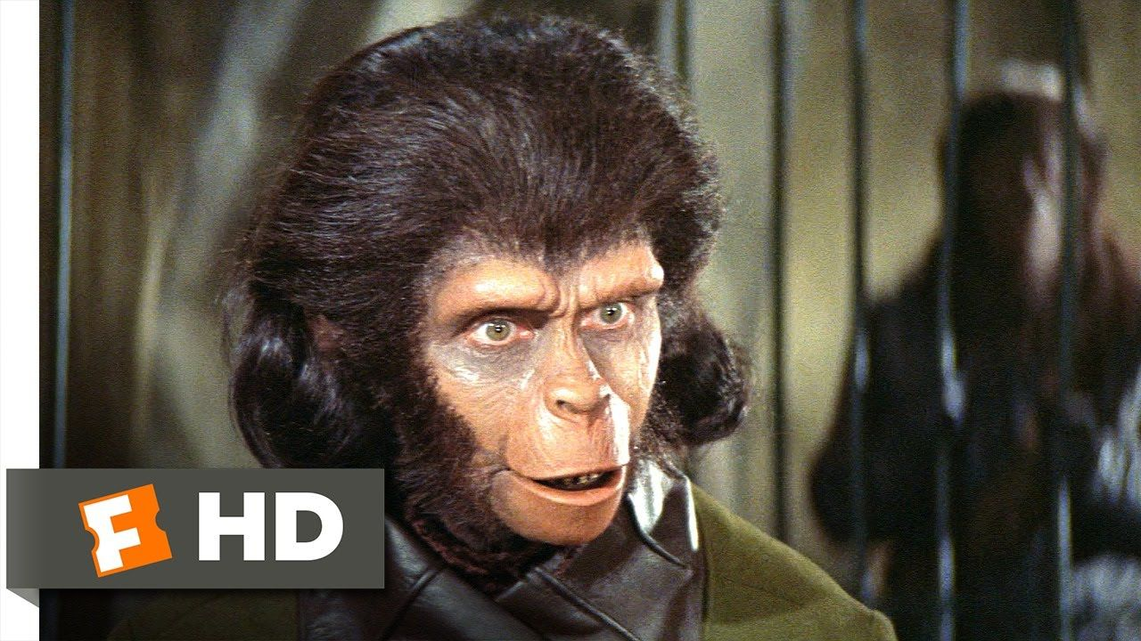 'the minute you open the door he goes in to his act' Planet of the Apes (2/5) Movie CLIP - Human See, Human Do (1968) HD