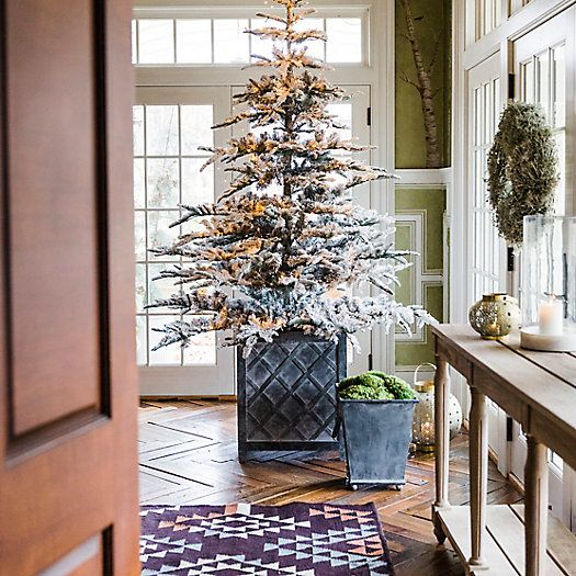 Disposing Of Christmas Trees: Types Of Christmas Trees