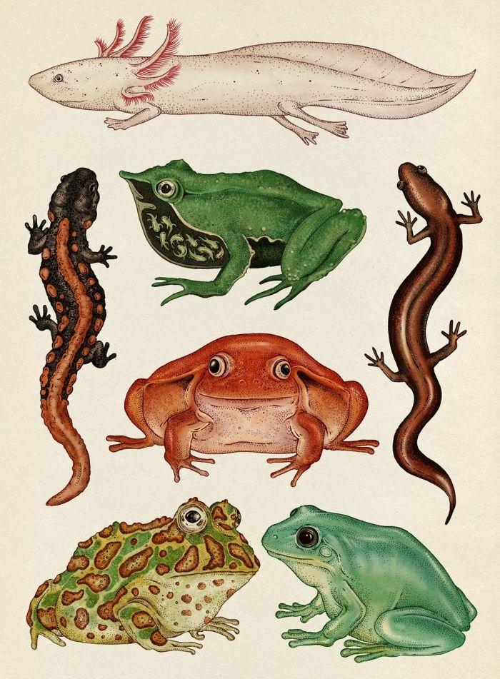Katie Scott - Sublime Botanicum | Animales, Ilustraciones y Arte