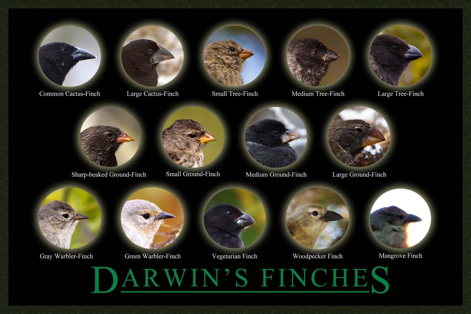 Galapagos Islands Darwin Inspiration Galapagos Finch