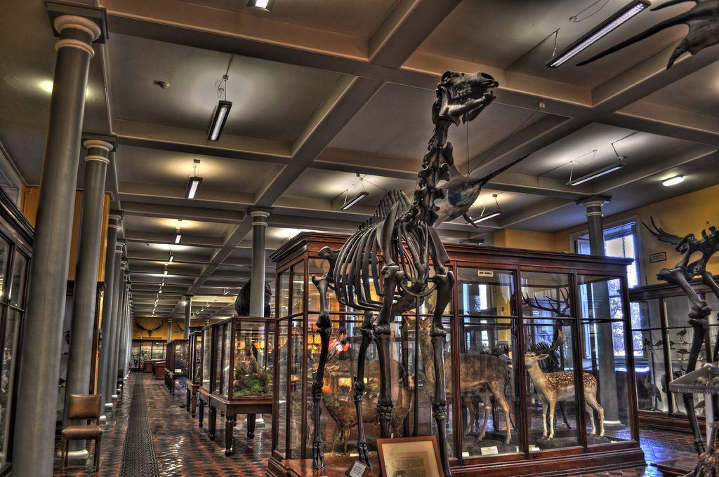 Dublin Ireland Natural History Museum