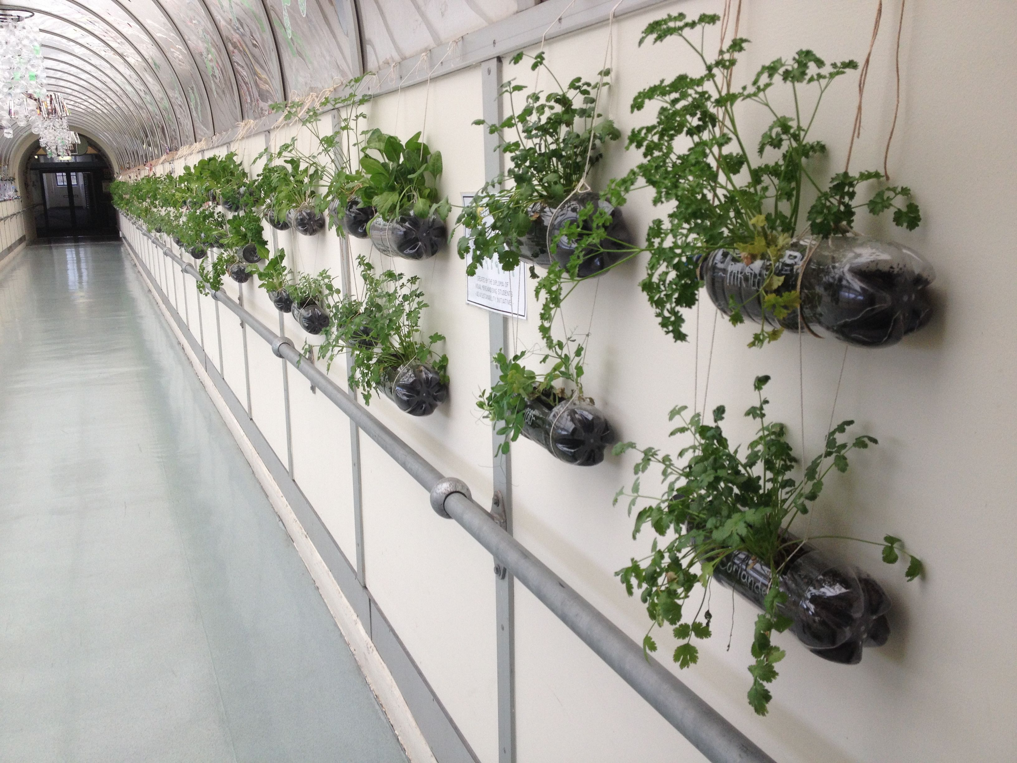 Students Used Recycled Soft Drink Bottles To Install Hanging Herb