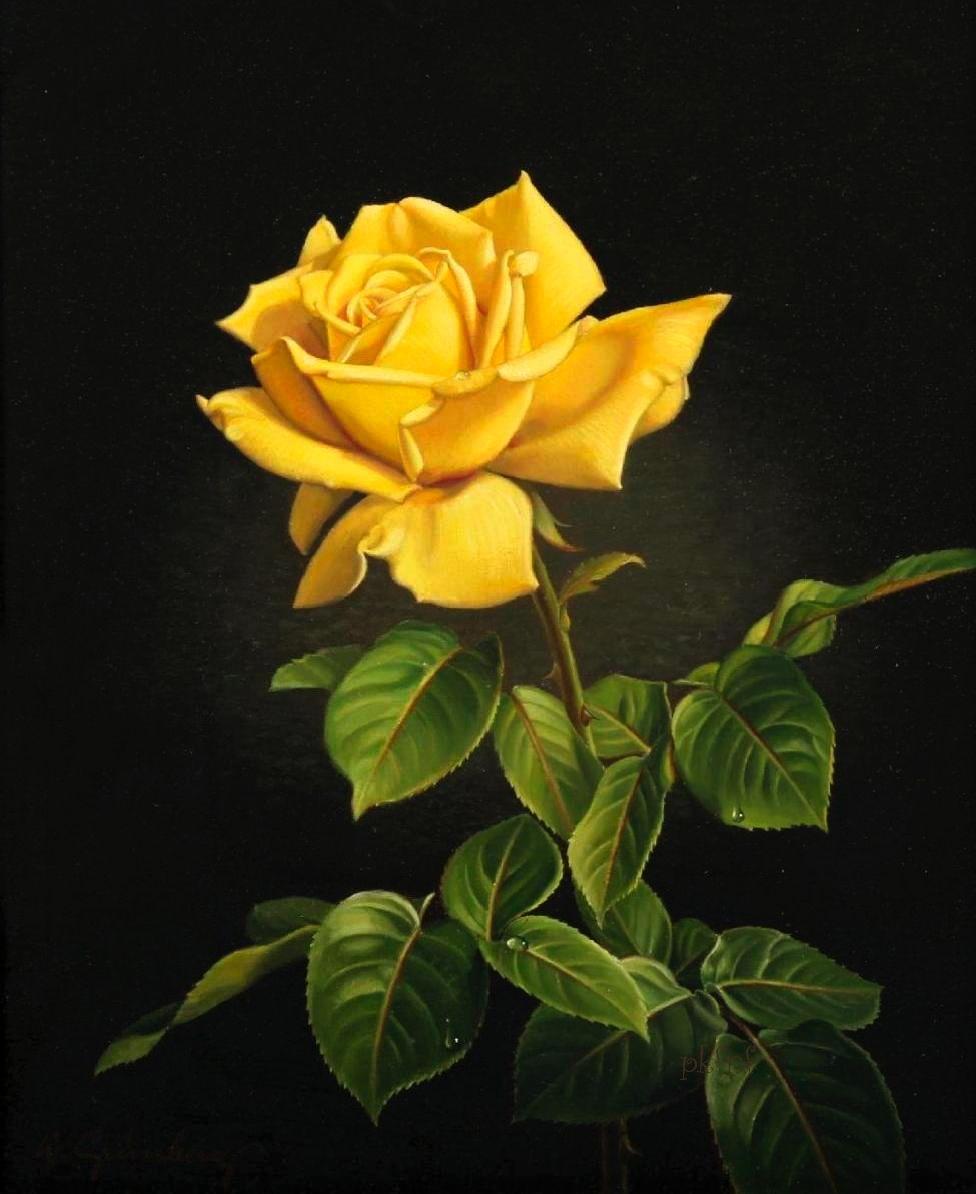 Au fil des pages wolfgang grunberg Цветы розы pinterest