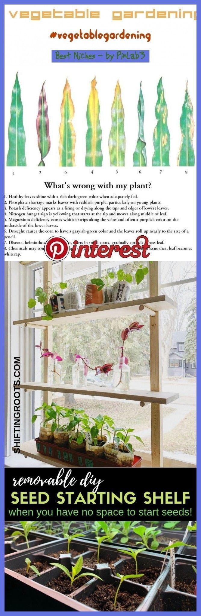 Indoor Gemüsegarten #Indoor #vegetable #Garten Indoor Gemüsegart -   Gemüs