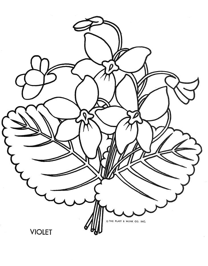 Flowers To Color Fritzi Brod Illustrator Platt And Munk 1951 Gallery Link Columns Size Ids