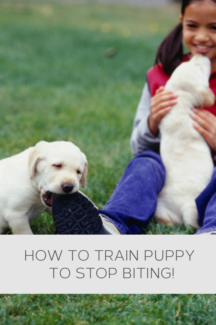 biting puppy a complete guide to stopping puppies biting - 735×1104