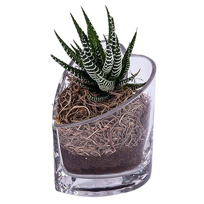 Outflower Creative Ceramic Handmade Vase Succulent Plants Pot Container Blue