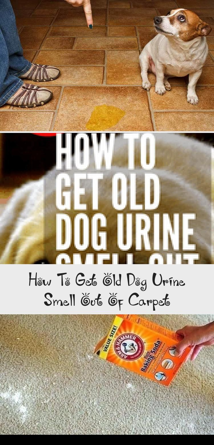 How To Get Old Dog Urine Smell Out Of In 2020 Dog Urine Dog Pee Smell Old Dogs
