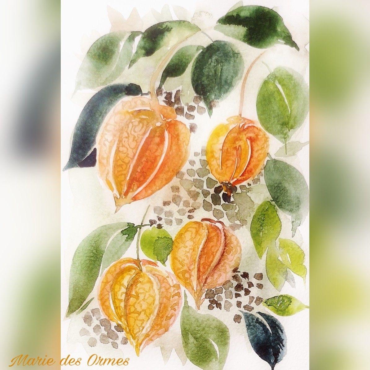 #amourencage #physalis #aquarellepainting #aquarelleaddict #aquarelles #watercolorflowers #watercolor_art #leavesinwatercolor #watercolorfloral #aquarela #watercolorarts #comefloralwithus #comeflowerwithus @picsart_official_editing #watercolorart #watercolour #mpdesormiere #marie_des_ormes