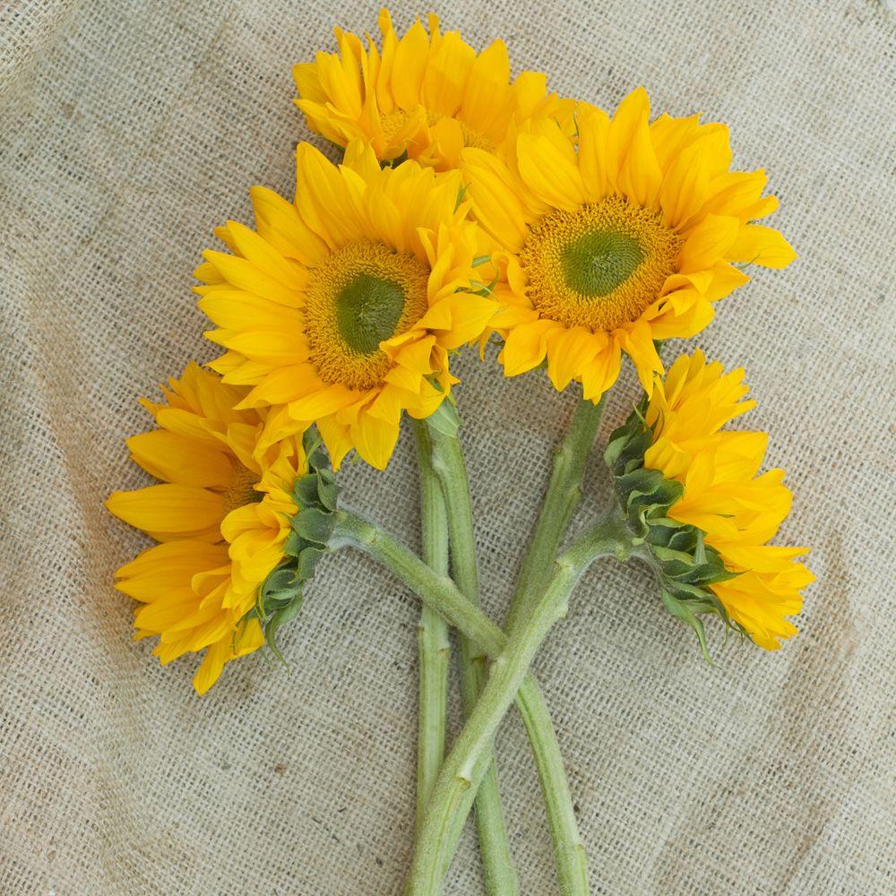 Sunflowers green center google search yellow flowers pinterest sunflowers green center google search mightylinksfo