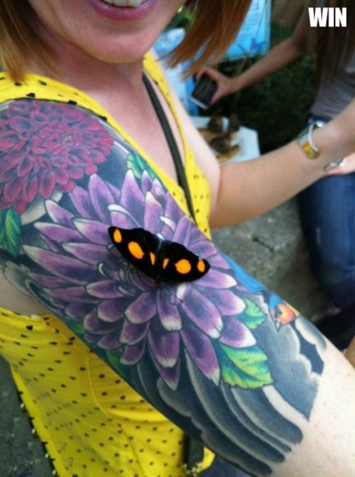 SEE MORE FLOWER AND BLACK BUTTERFLY TATTOO ON ARM