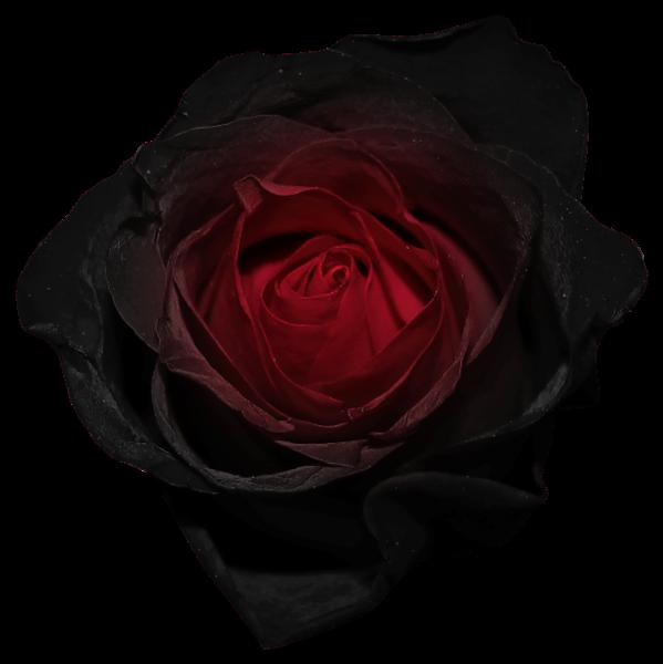 Red E Black Rose Png Imagem Black Rose Fade To Black Rose