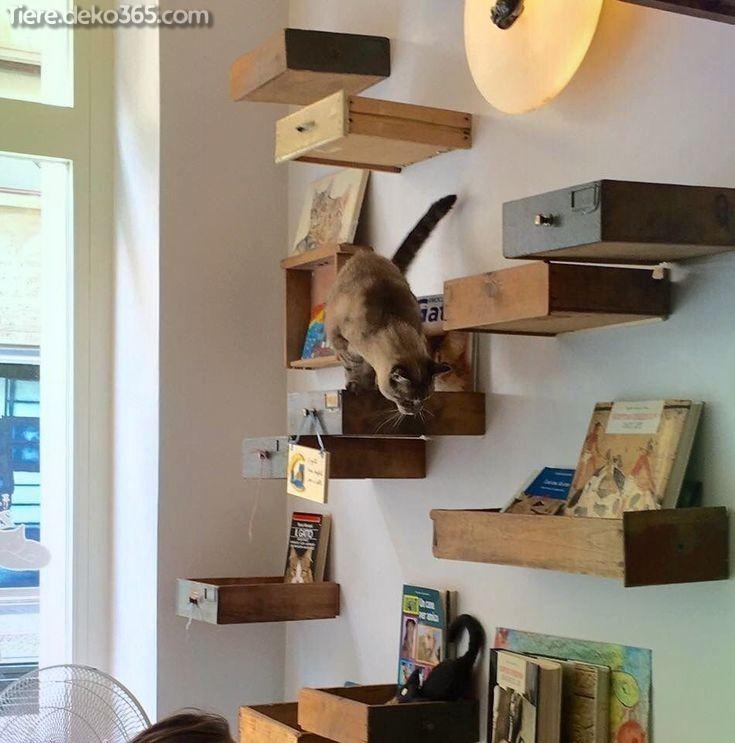 Unglaubliche Skizze und Informationen zu Cat Cafe -  Unglaubliche Skizze und Informationen zu Cat Cafe  #informationen #skizze  - #allergictocats #Cafe #Cat #catcat #cattattoo #catwallpaper #catsandkittens #crazycats #dogcat #Informationen #petscats #Skizze #und #Unglaubliche
