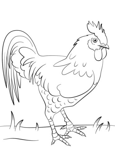 Gallo Dibujo para colorear | pájaros y aves | Pinterest | Gallos ...