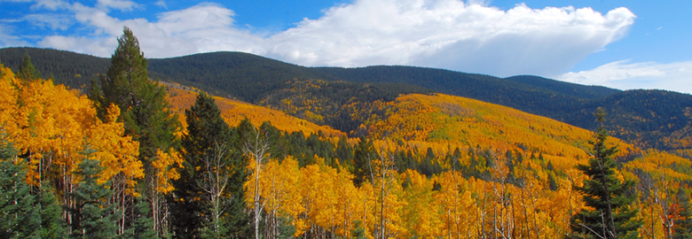 Santa Fe National Forest Scenic Byway New Mexico Tourism