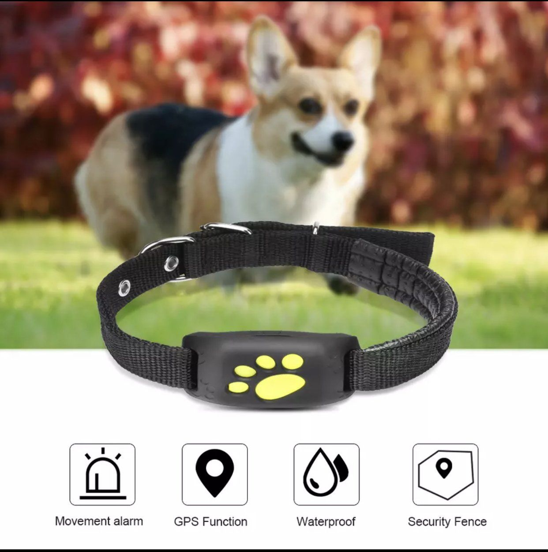 PupZee GPS Pet Tracker Pet gps, Pet tracker, Dog tracker