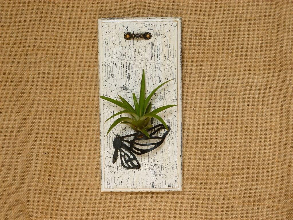 support cadre plante a rienne tillandsia fille de l 39 air pour un d cor nature d corations. Black Bedroom Furniture Sets. Home Design Ideas