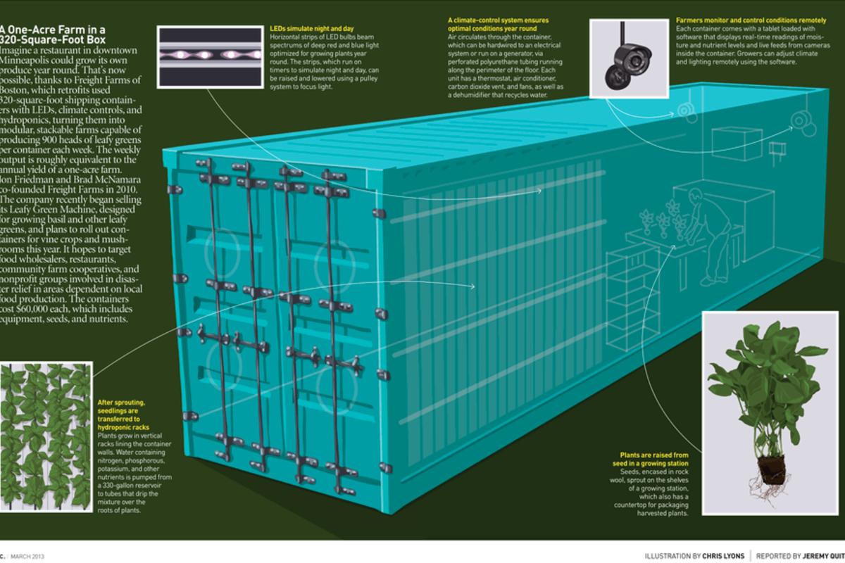 Aquaponics Greenhouse Plants