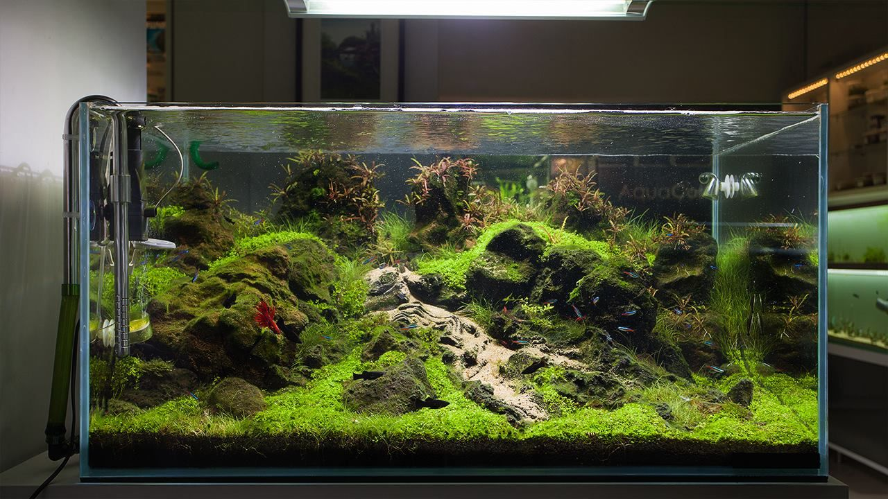 90x60x45 tank aquascape in the living room peha68 shared by