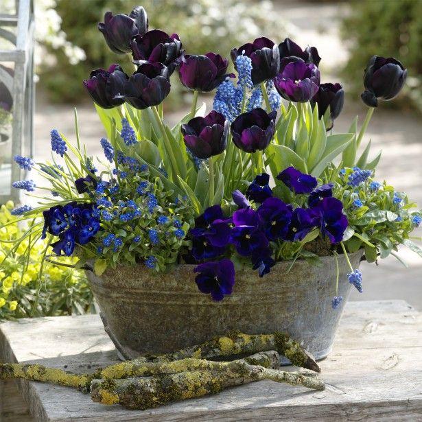 tr s belle id e de pot e bisannuelle planter en automne plantes pinterest tres beau. Black Bedroom Furniture Sets. Home Design Ideas