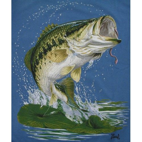 Hudozhnik Al Agnew 128 Rabot Bass Fishing Pictures Fish Art Animal Photography