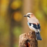 Nature Sounds Birds Chirping by colorbottle on SoundCloud