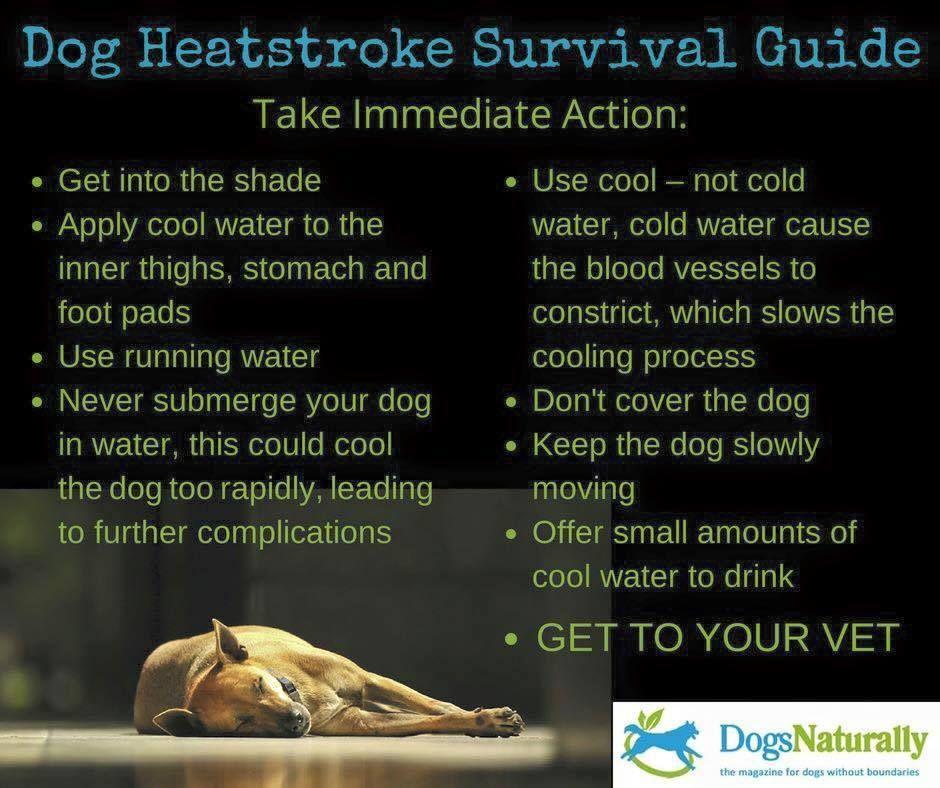 Pin by Helga on Dogs Heat stroke in dogs, Dog in