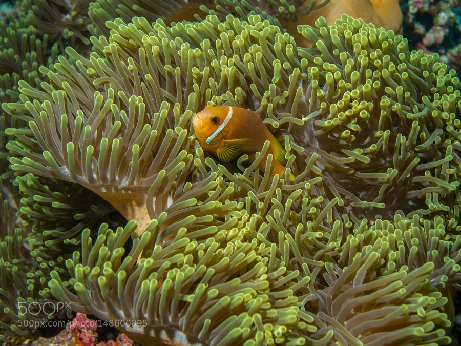 """Clownfish Go to http://iBoatCity.com and use code PINTEREST for free shipping on your first order! (Lower 48 USA Only). Sign up for our email newsletter to get your free guide: """"Boat Buyer's Guide for Beginners."""""""