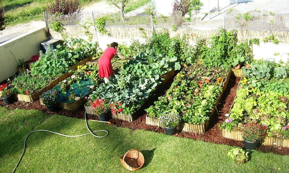 ... que ajuda a cultivar horta org?nica em casa App, Ems and Startups