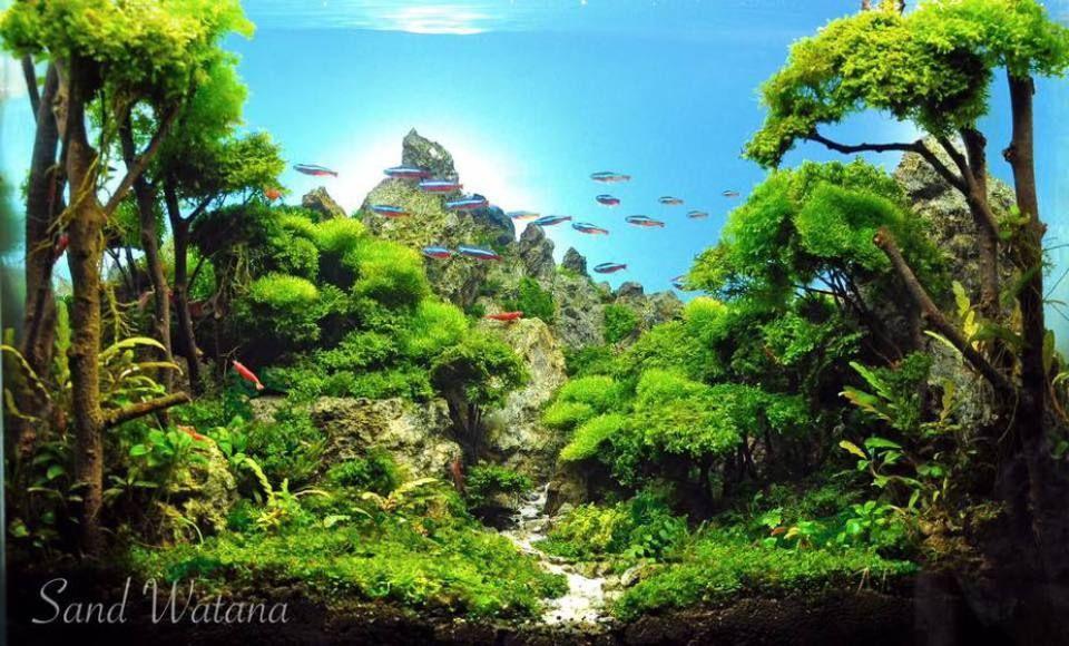 Bonsai Driftwood Forest 7