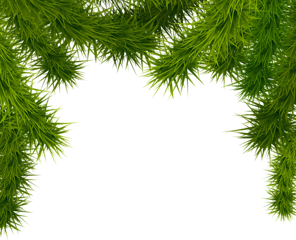 Pine Branches Png Clipart Image Pine Branch Christmas Clipart Clip Art