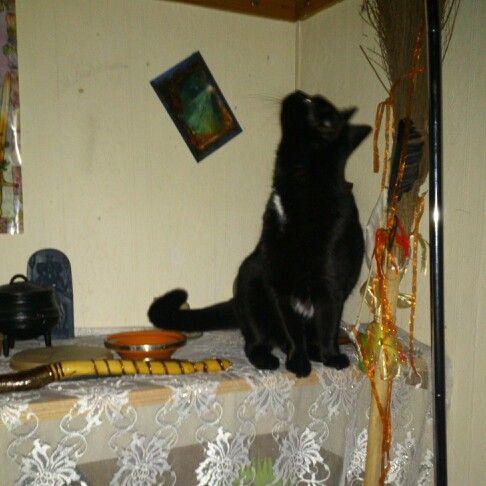 Ishtar sky gazing on the altar