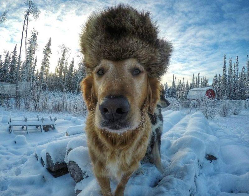 мимимишные собаки