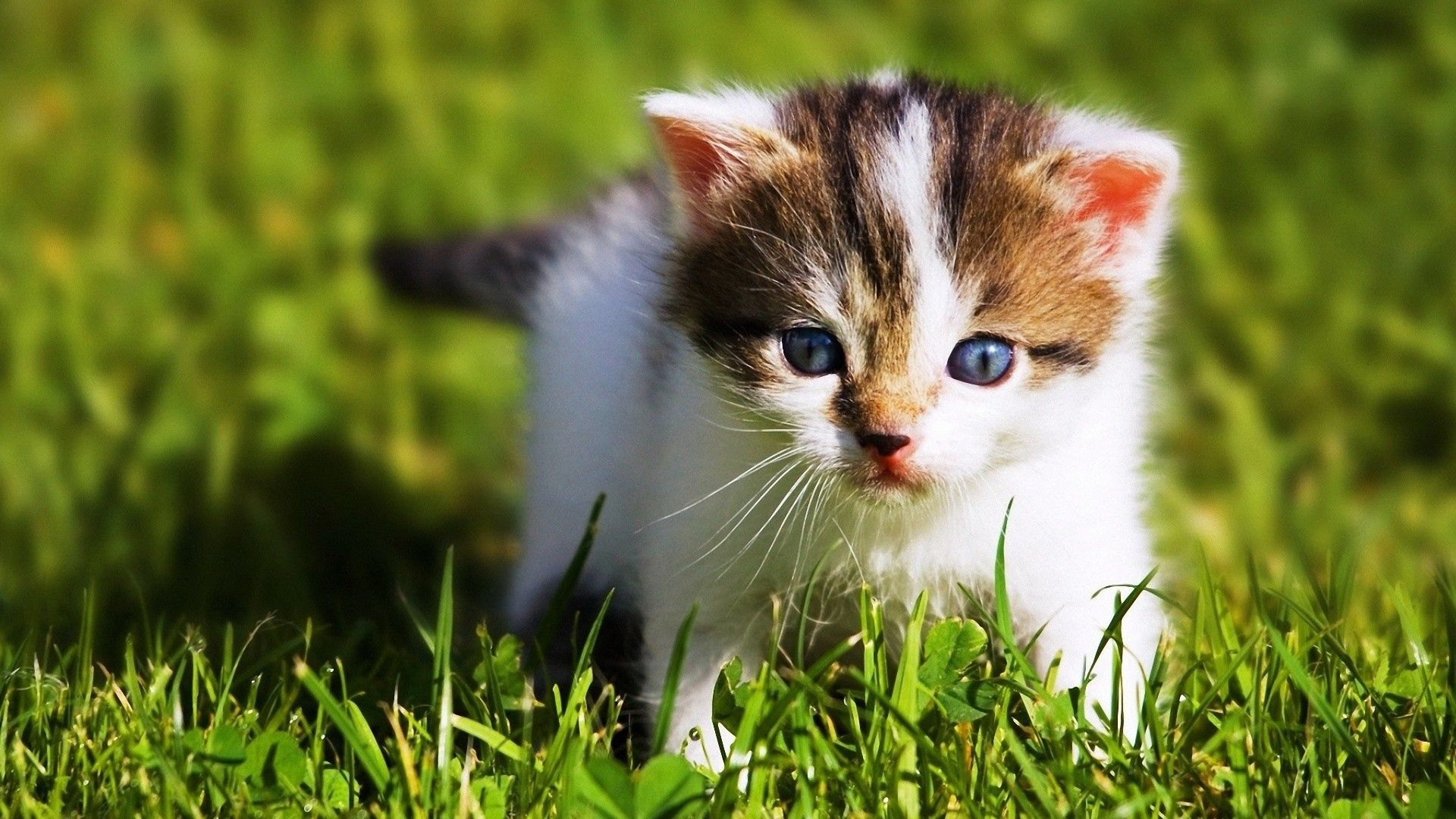 11 Cute Baby Animals That Will Get Rid Of Your Stress Cute Baby Cats Animal Wallpaper Wild Animal Wallpaper
