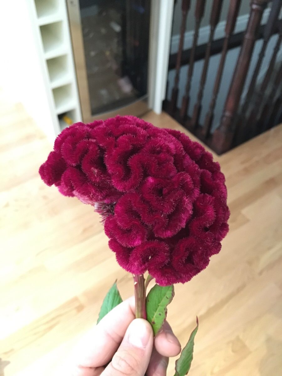 This flower that looks like a human brain - Imgur | Beautiful ...
