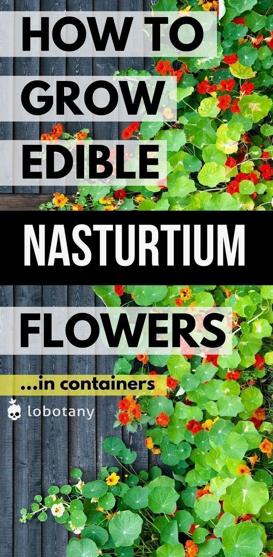 Gemüsegarten Ideen für kleine Räume – Einfacher Gemüsegarten für Anfänger …..   – garden for beginners