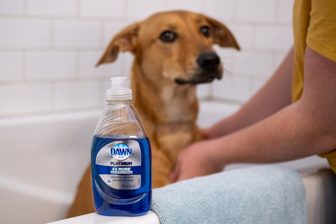 Pin By Ant Harris On Clean House In 2020 Dog Owners Dry Dog Shampoo Diy Dog Shampoo