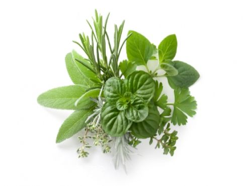 فوائد نبات المرمية او السالمية | سوبرماما