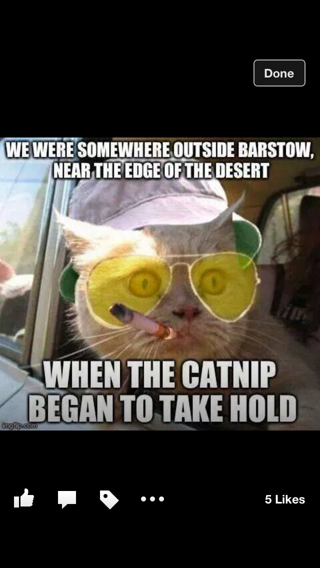 Pin by Linda Lord on Funnies Fear, loathing, Haha funny