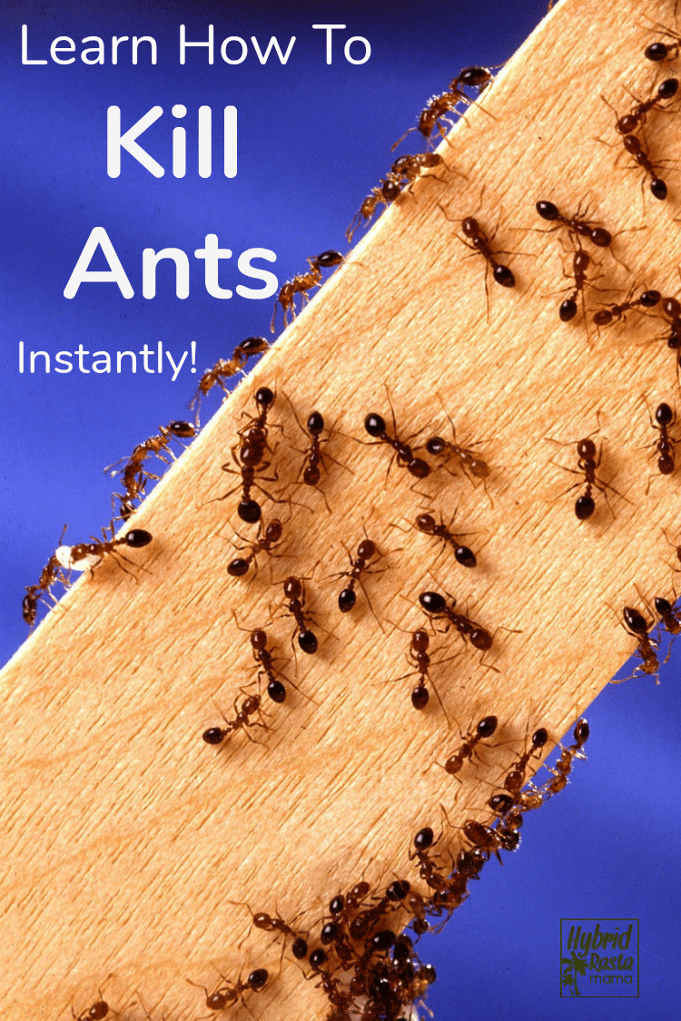 How To Get Rid Of Ants 9 Natural Ways To Prevent Ants In 2020 Get Rid Of Ants Kill Ants Ants In Garden