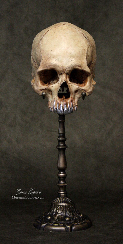 Real human skull with polished metal teeth and custom brass stand ...