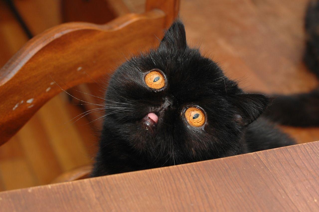 Черный кот картинки прикольные смешные