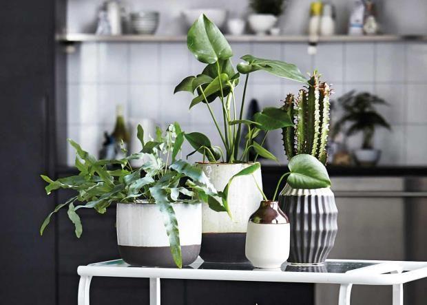 Wenig Licht Pflanzen Fur Dunkle Raume In 2020 Pflanzen Fur Dunkle Raume Schoner Wohnen Und Pflanzen