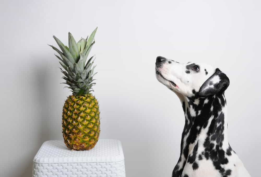 15 healthy human foods that are also beneficial to dogs