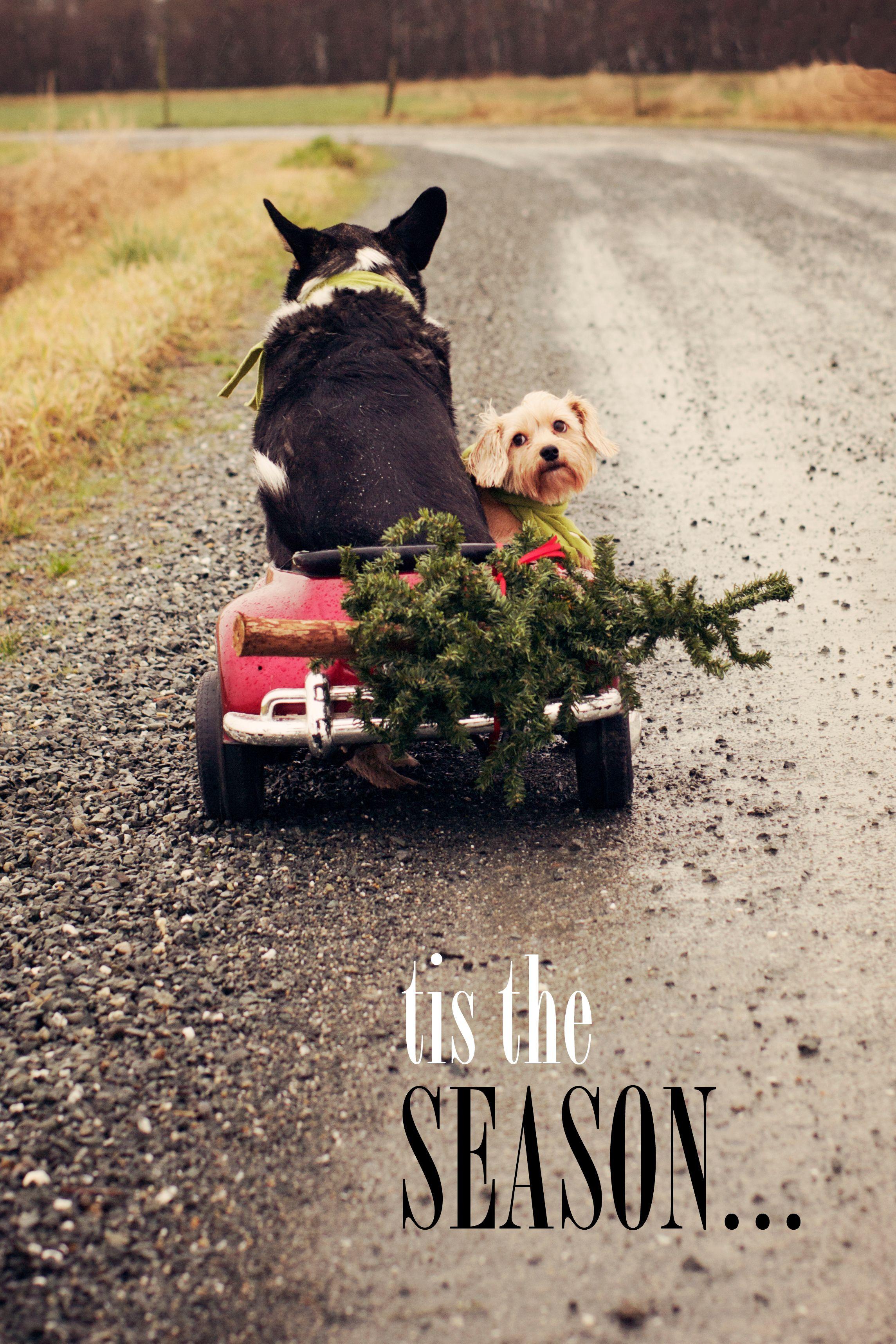 my dog card 2012 #dog #Christmascard