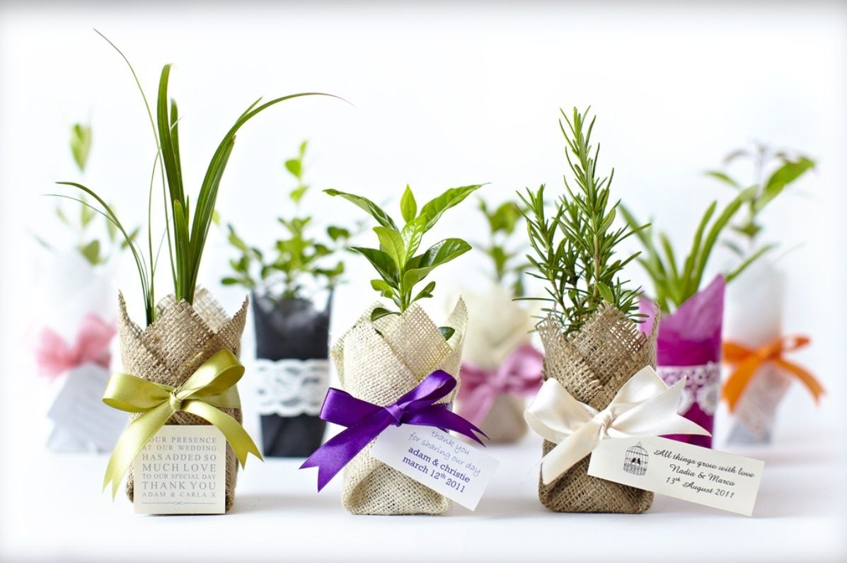 Bonbonaires | هدايا للزواج | Pinterest | Ideas para fiestas, Favors ...