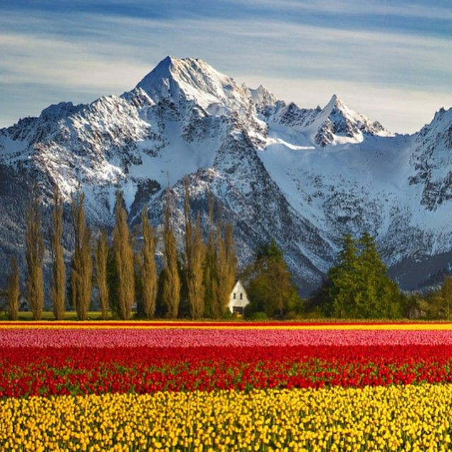 6. Found in your state. the beautiful Tulip fields