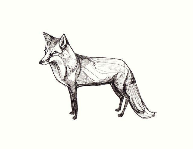 Fox Fox Art Fox Tattoo Fantastic Mr Fox